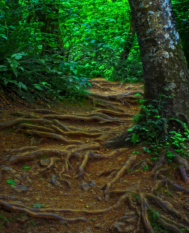 tripping over roots