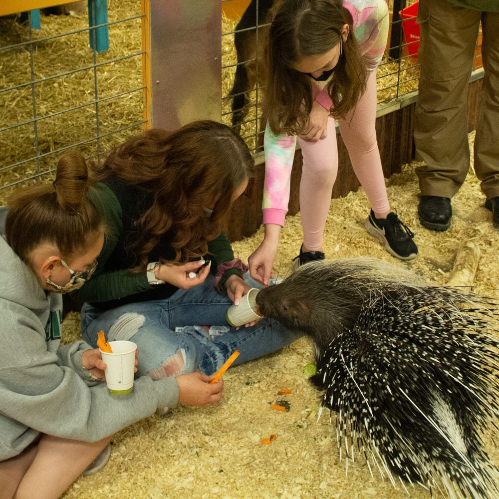 Porcupine-Experience-Group