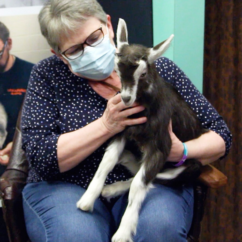 Hold-a-Baby-Goat