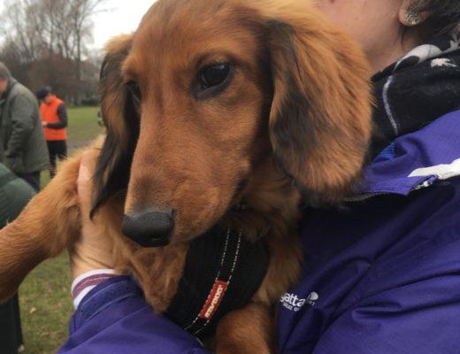 Wiener Dog Walk and More: Edinburgh, Scotland