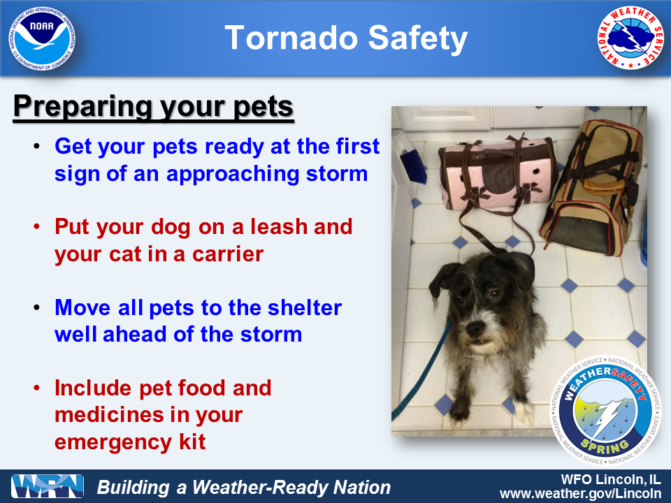 Tornado Safety for Pets