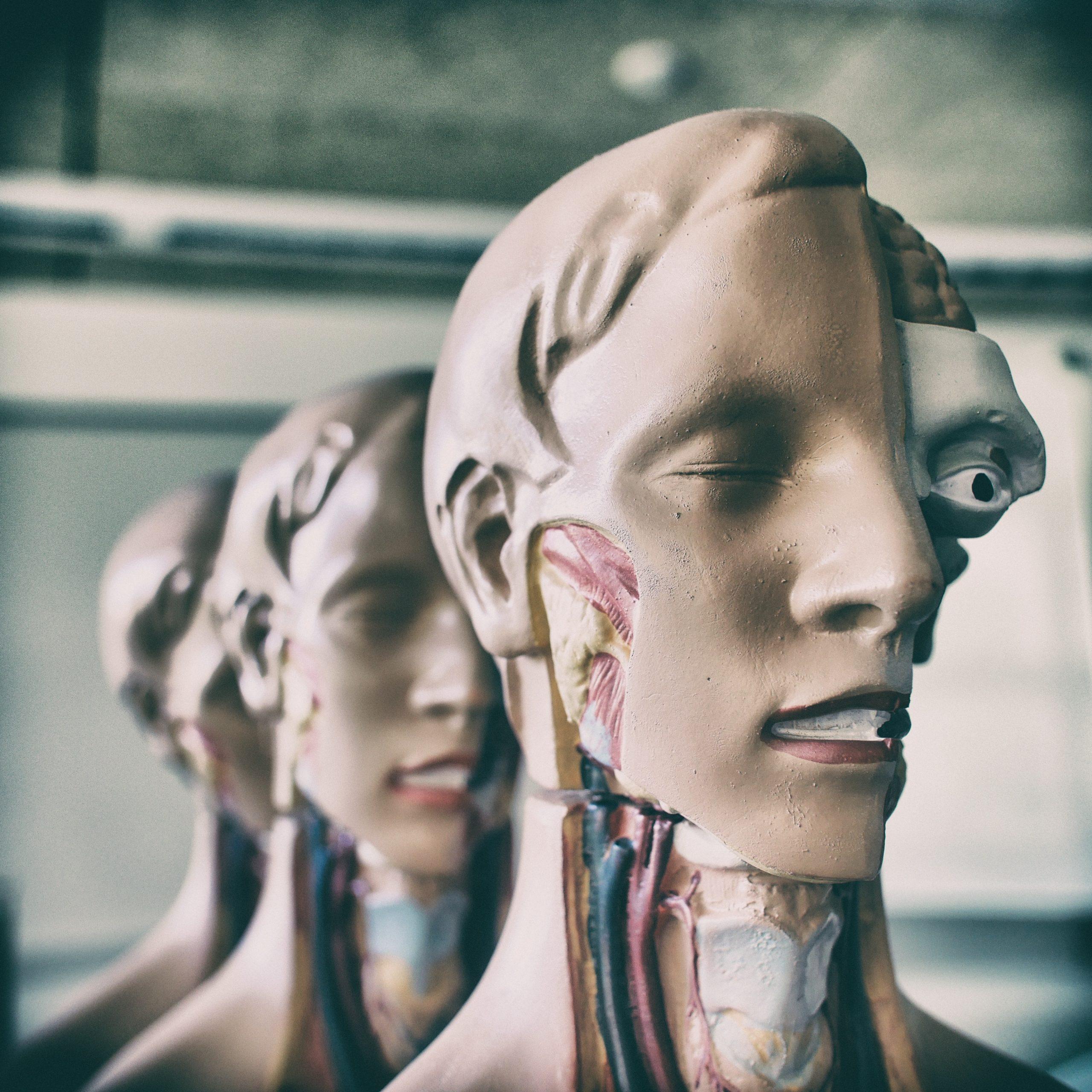 Anatomía y salud de la voz