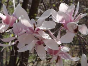Spring Pic 1