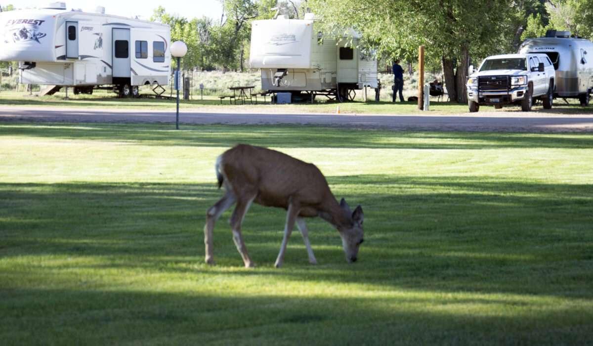 Deer grazing at Deer Haven RV Park