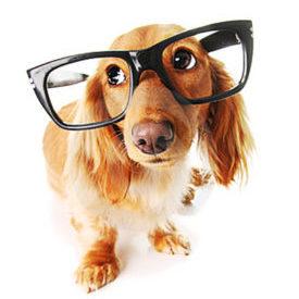 dog friendly offices san diego