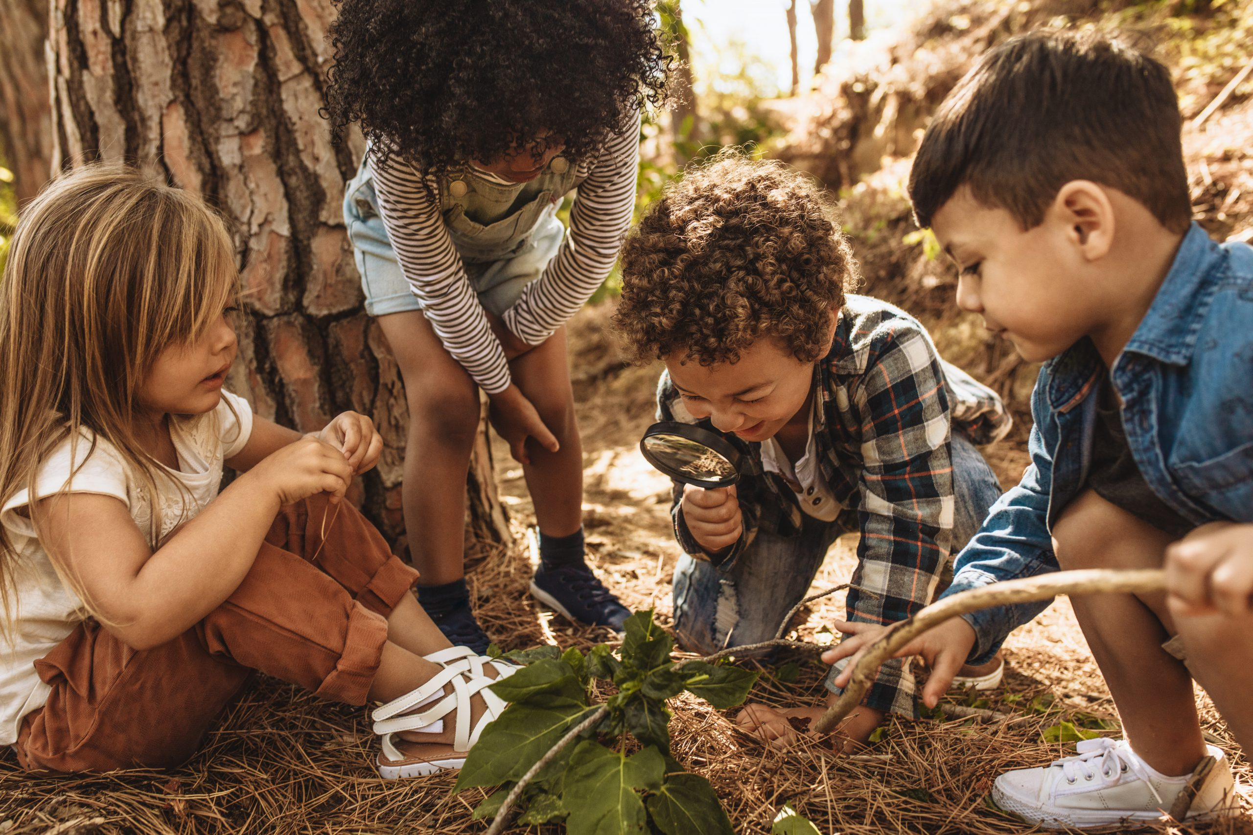 Children in forest looking at leaves as a researcher together with the magnifying glass.