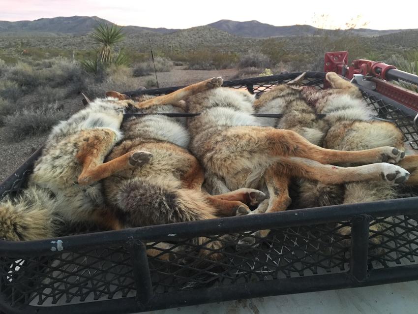 Predator-Control-Arizona