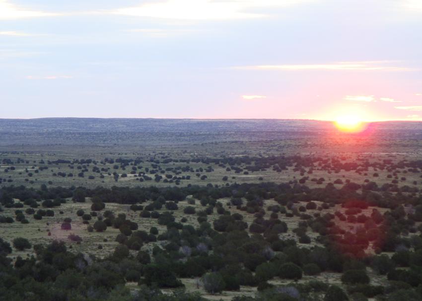 Coyote Calling Arizona at 5,500 feet