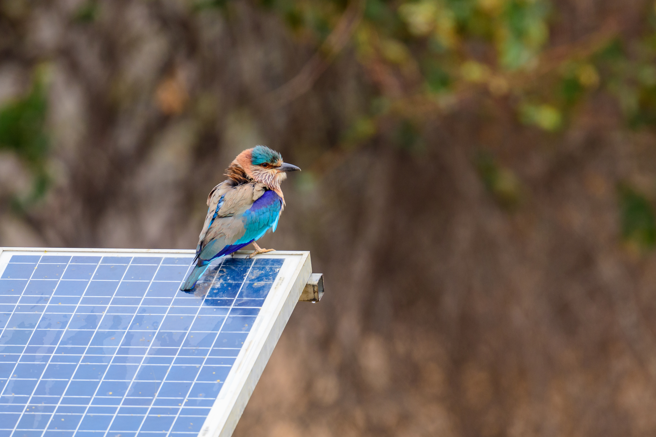 A Bird sitting on top of a solar panel.