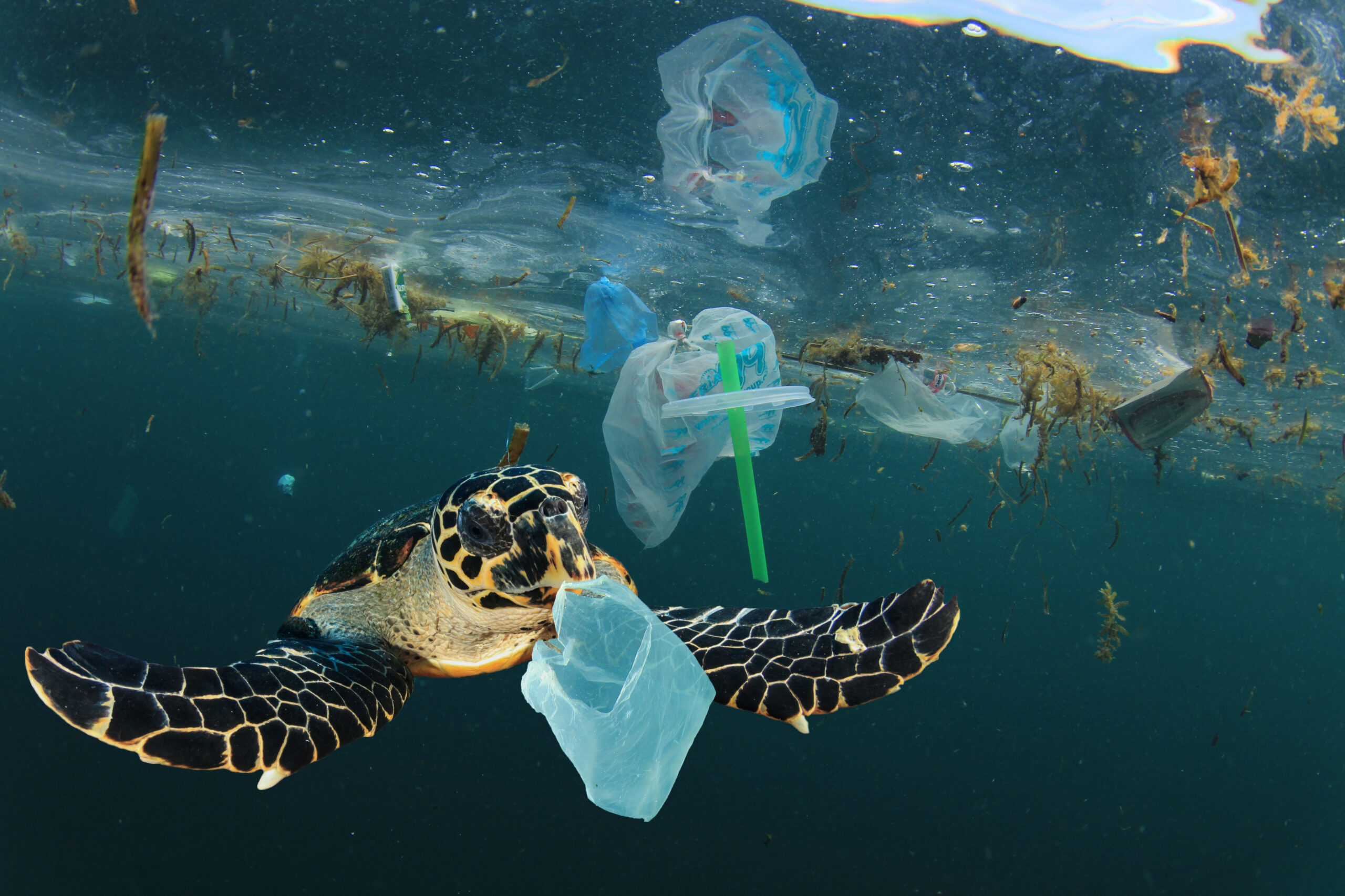 A sea turtle swimming in the ocean surrounded by plastic waste.