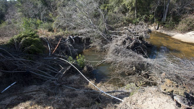 Section of Carpenter Creek clogged by sand and debris