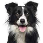 How to Reduce Your Dog's Carbon Pawprint
