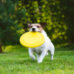 The Importance of Maintaining a Routine with Your Pets