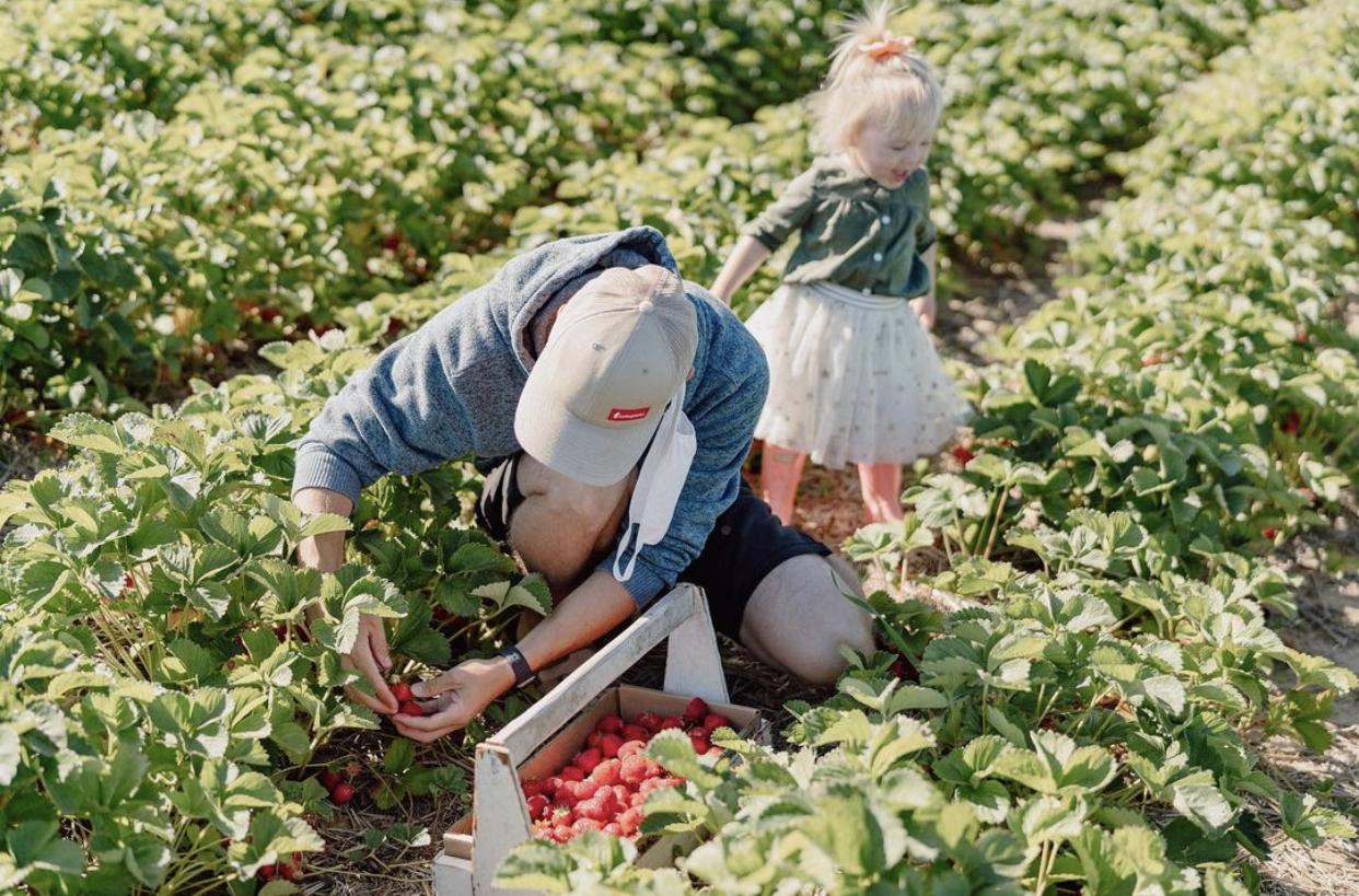 People Picking Strawberries at Siemers