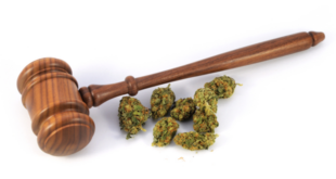 Cannabis operators agree to settle lawsuit and pay back taxes to city