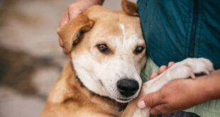 """October is """"Subaru Loves Pets"""" Month – Adopt A Pet Today"""