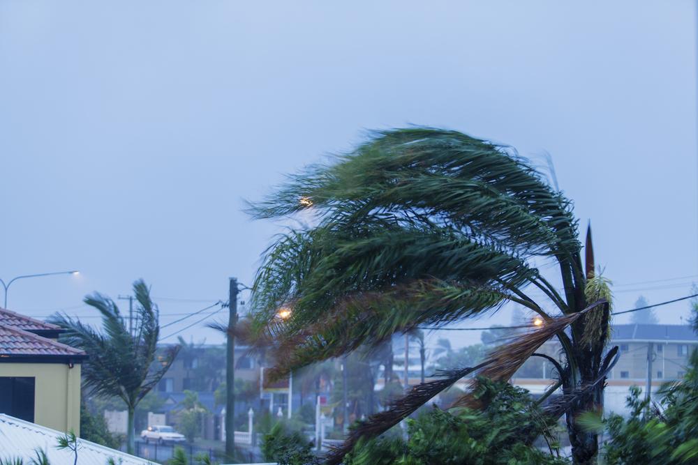 Palm tree in a hurricane