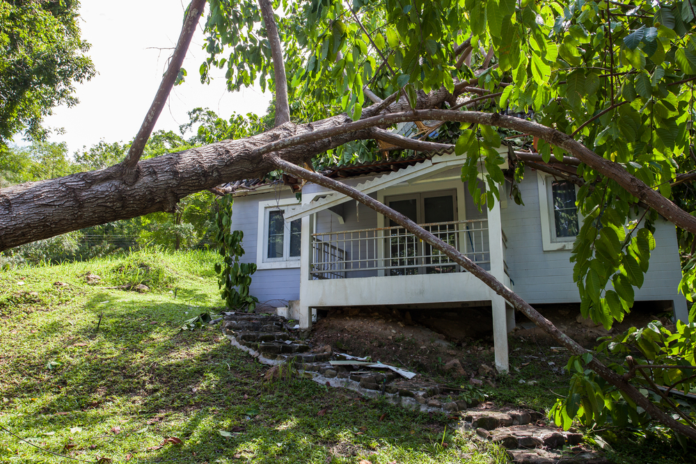 Tree falling and damaging a roof