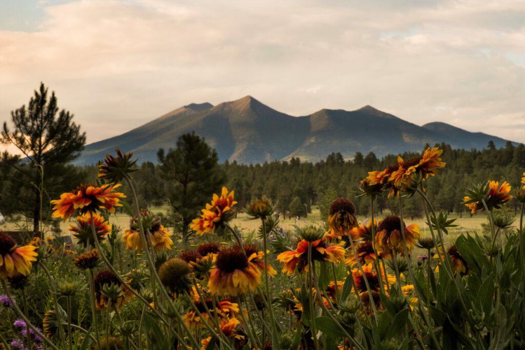 Arboretum peaks w flowers Cherri Lamont 1