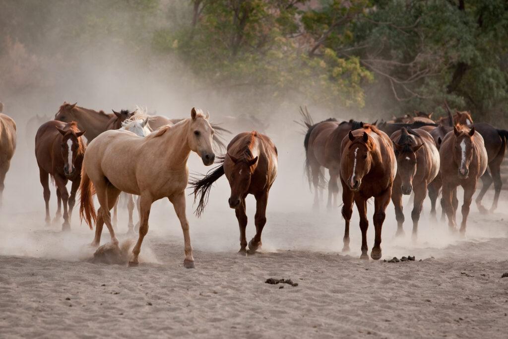 Horses Judy Bane