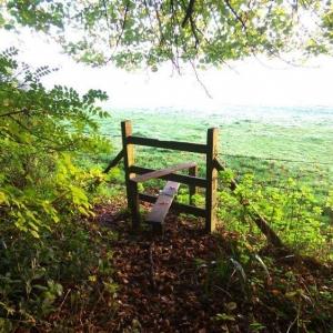 Simon Cross - Dorset:  BOOK SELECTION  Bryanston Woods