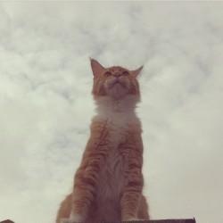 The friendlest cat