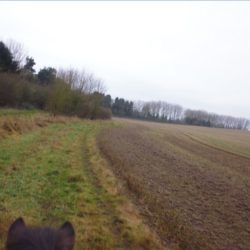 Freedom: Riding my friend's horse Gydja on Prestwold Estate