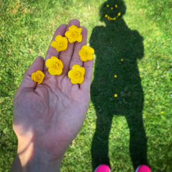 Smile shadow with buttercups.