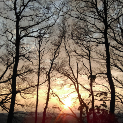 Beacon Hill Trees at Sunset