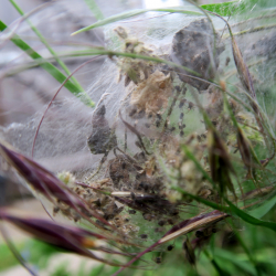 I found a spiders nest