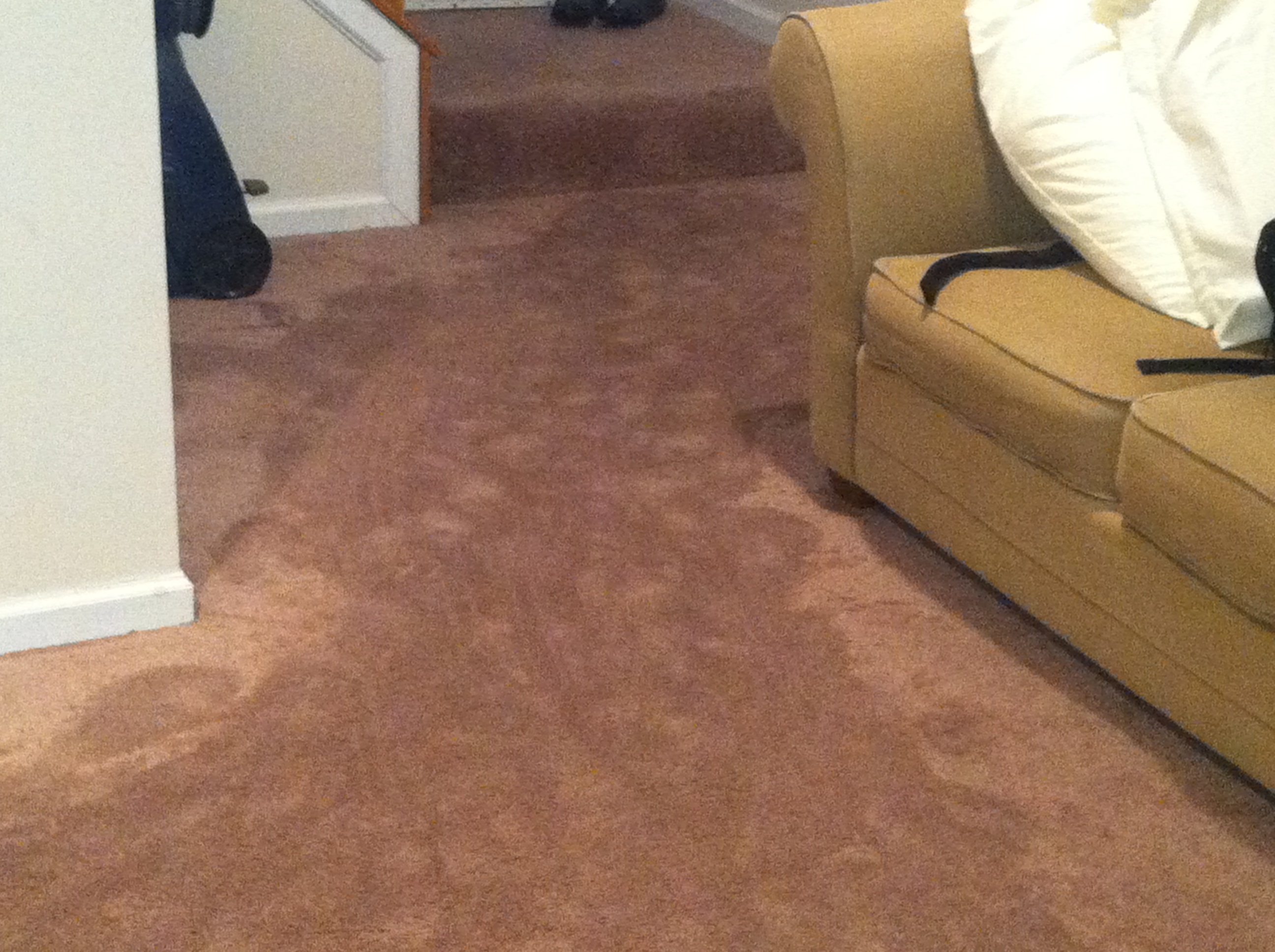 Water Damaged Carpet- Restoration Services by Carpet Keepers