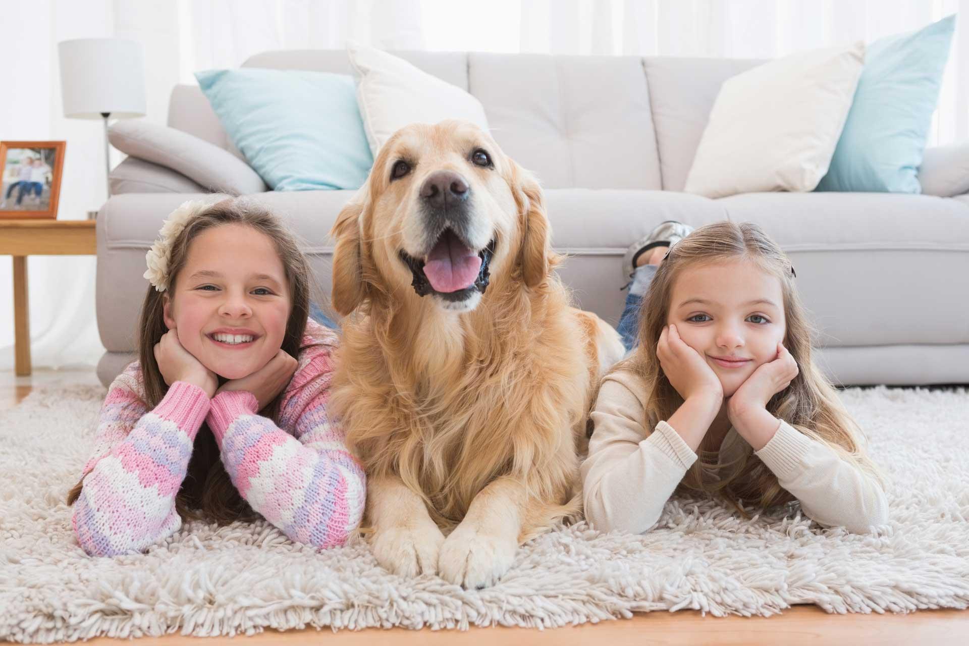 Leesburg Rug Cleaner by Carpet Keepers Eco-friendly rug cleaning