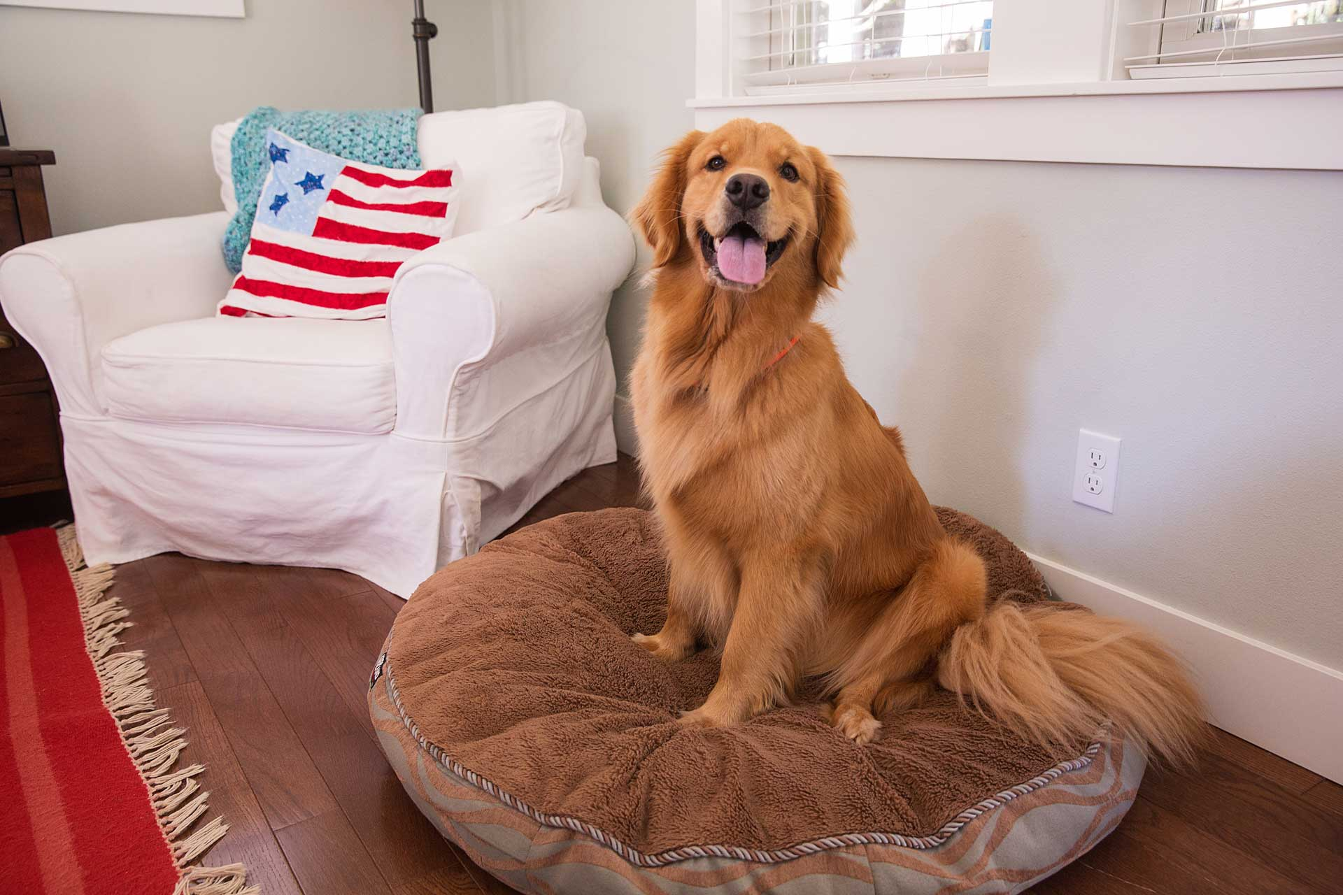 Image of Dog on his Bed in a post about Professional Deep Carpet Cleaning reduce pet dander allergens