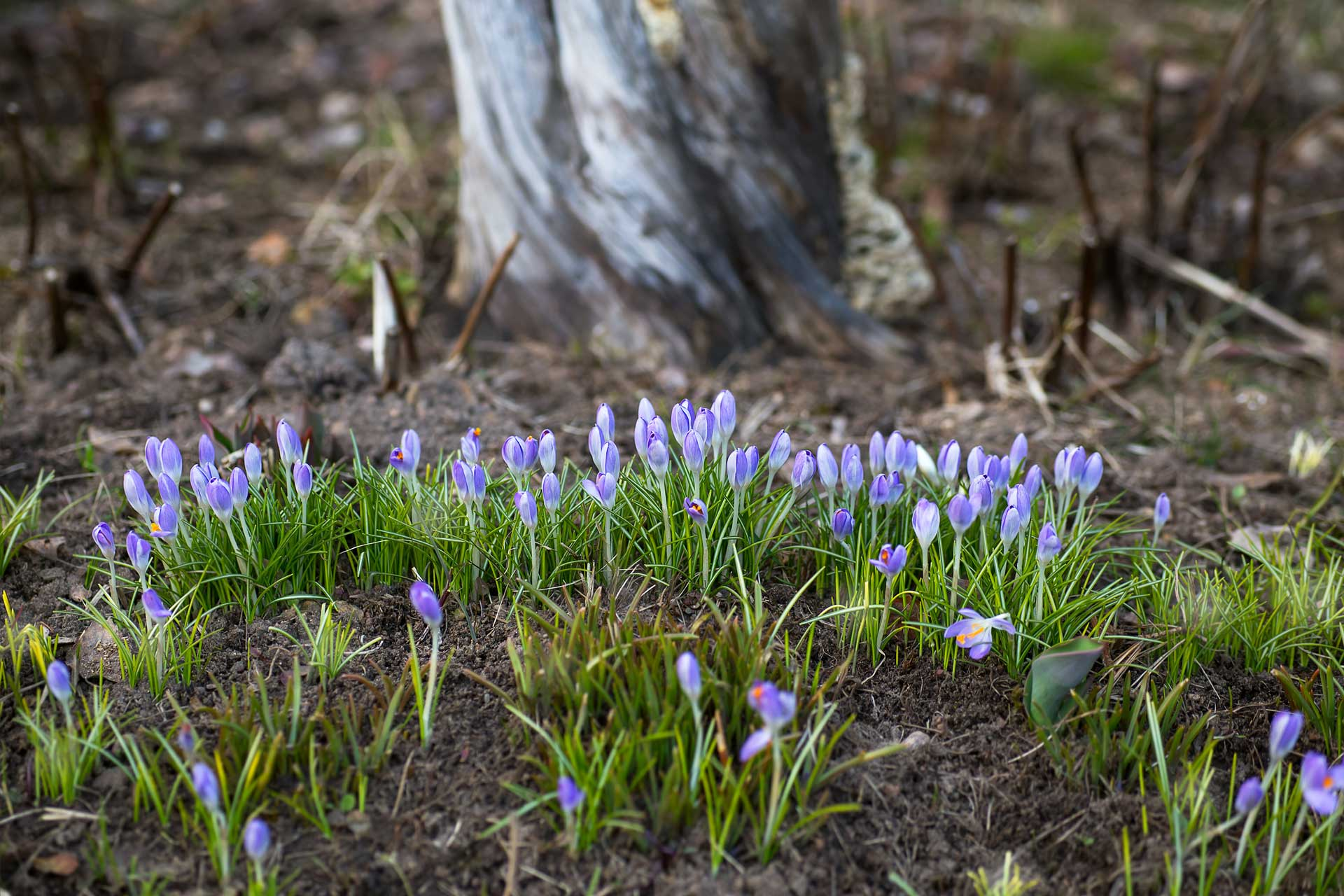 image of fresh wild flowers that depict professionally cleaned carpets will reduce or eliminate carpet odors