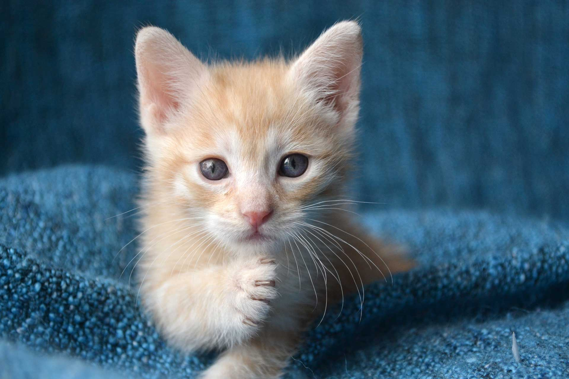 Image of Kitten used in a post by Carpet Keepers in Leesburg VA