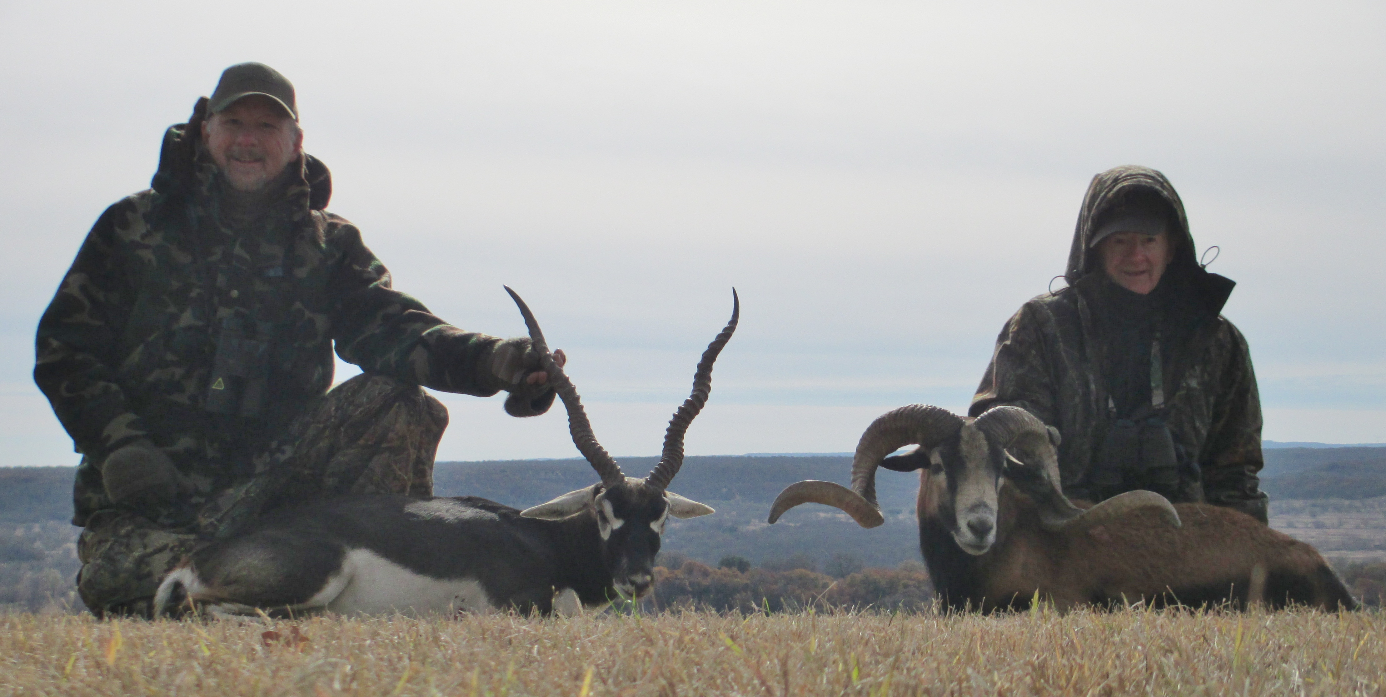 Blackbuck Antelope and Mouflon