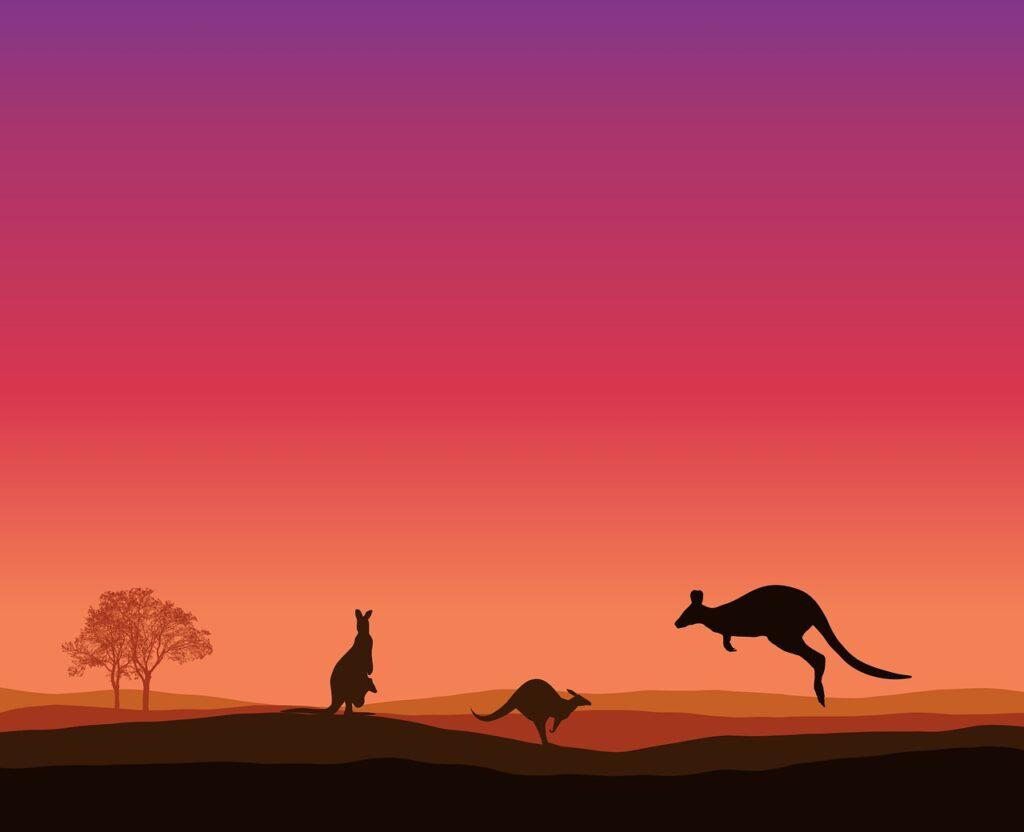 kangaroo, sunset, trees