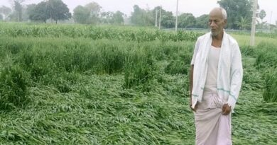 ओलावृष्टि से सरसों, गेहूं व तंबाकू की फसल को तगड़ा नुकसान समस्तीपुर Town
