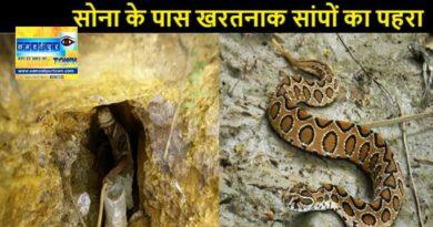सोनभद्र में 3346 टन सोने के भंडार के पास जहरीले सांपों का है डेरा, रसेल वाइपर काट दे तो बचना है असंभव समस्तीपुर Town