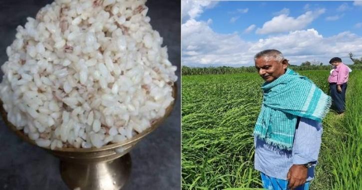 बिहार का मैजिक 'चावल' ठंडे पानी में पक जाता है, होता है शुगर फ्री, किसानों की खूब होती है कमाई समस्तीपुर Town