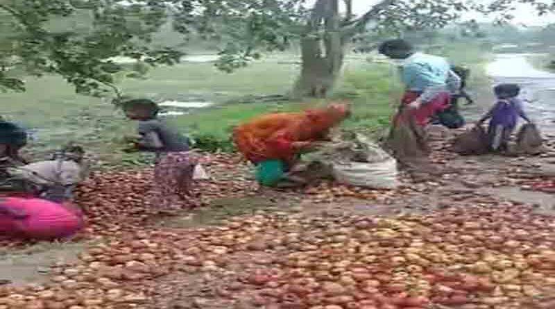 बिहार: सुबह सोकर उठे ग्रामीण तो चारो तरफ सिर्फ सेब ही सेब दिखा, चुनते-चुनते थक गए, फिर भी खत्म नहीं हुआ स्टॉक समस्तीपुर Town