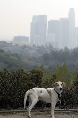 Buddy in his new city, Los Angeles.