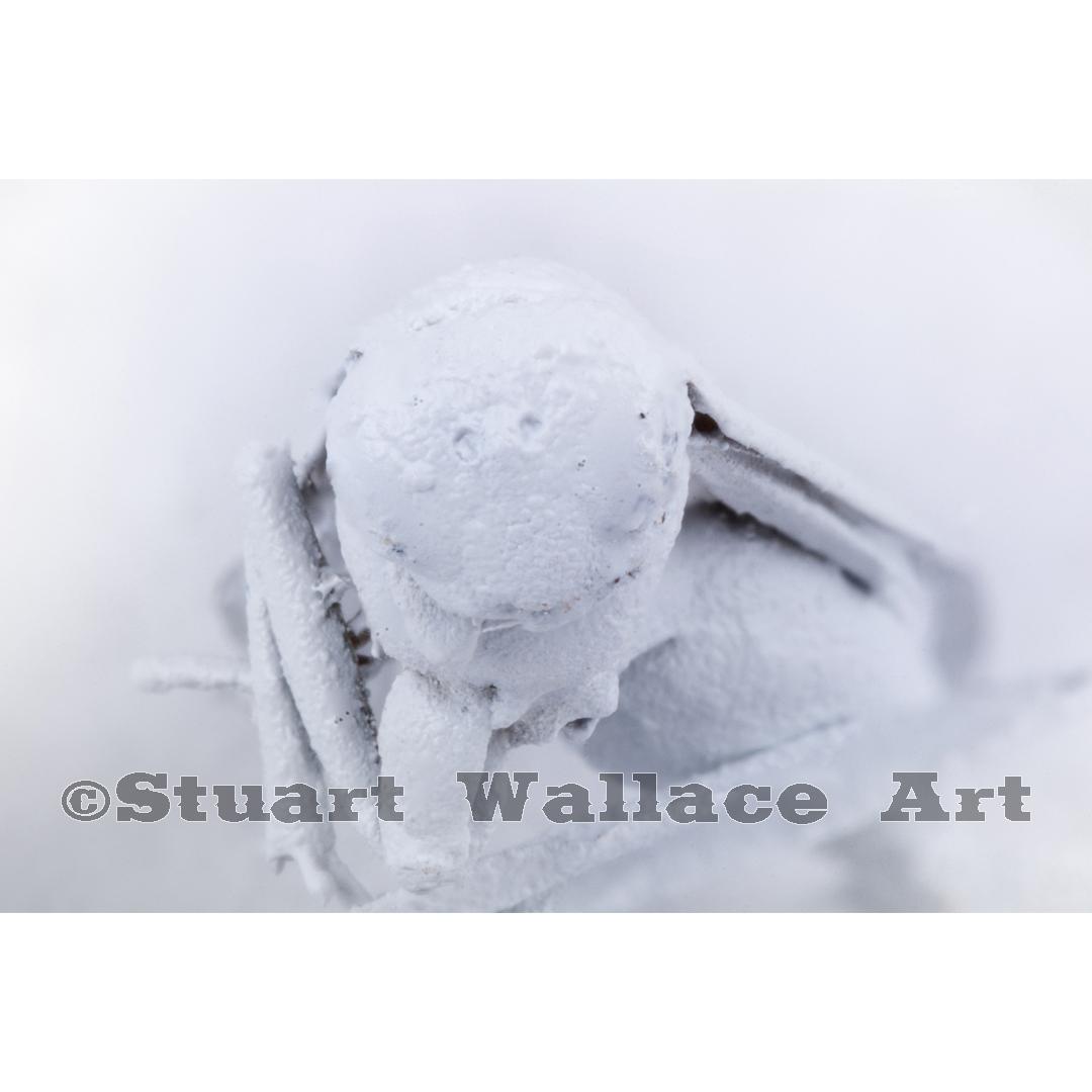 41 WM 939: Macro Of White Wasp Face