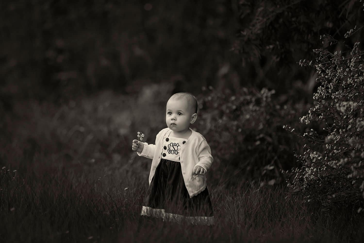 Black and white photo of baby holding flower by Annie Whitaker Photography
