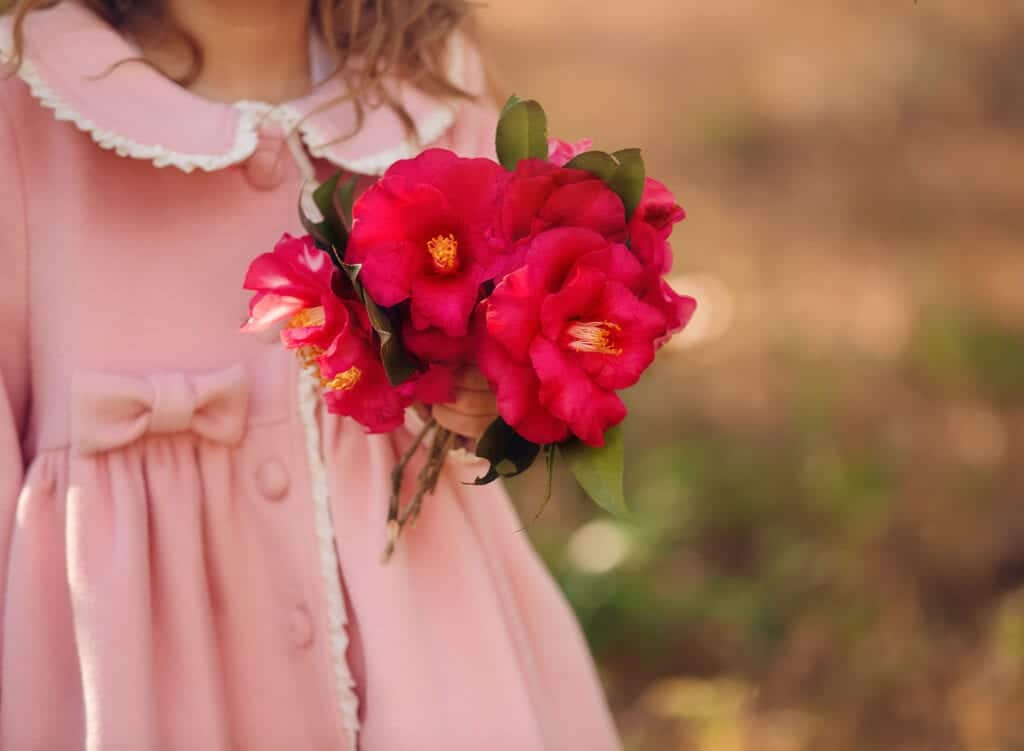 hot pink camellia flowers
