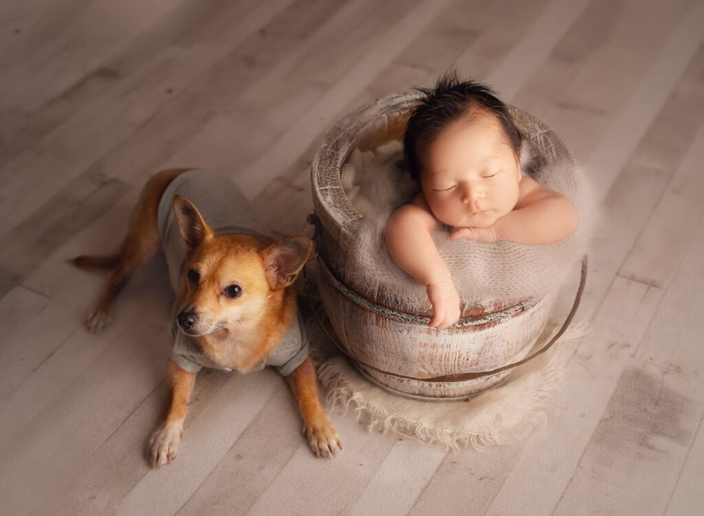 newborn baby in bucket with fur brother