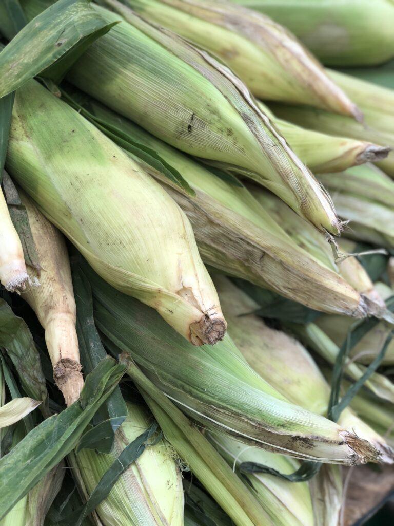 Fresh Corn with Husks
