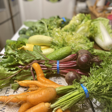 Produce From a CSA Share including carrots, beets and lettuce