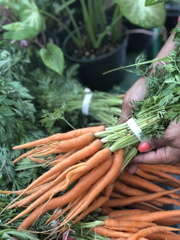 A handful of fresh organic carrots