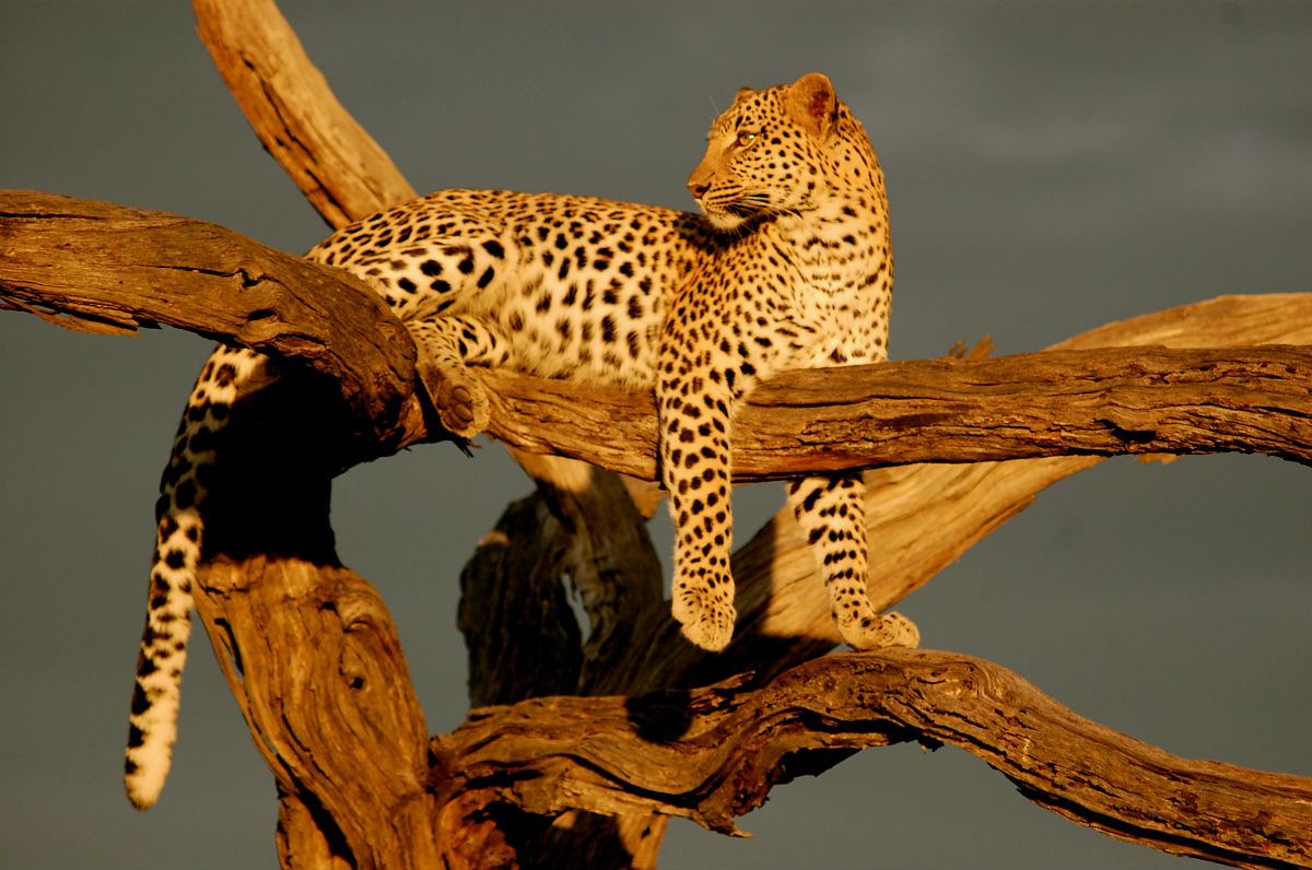 Is A Safari In Your Future?